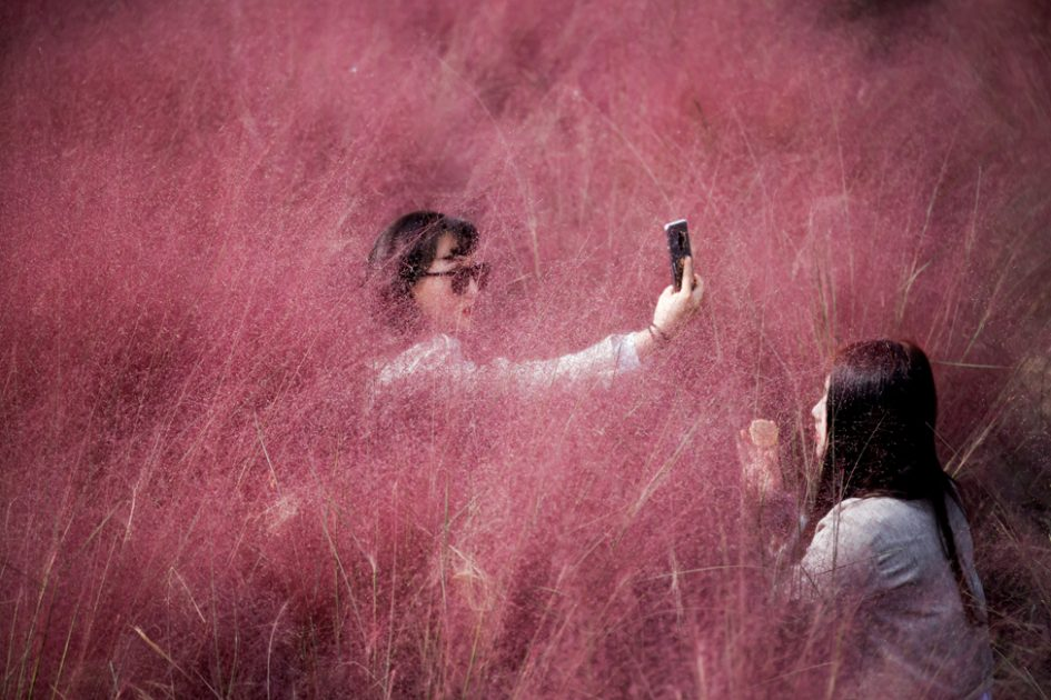 A woman takes a selfie as her friend adjusts her makeup in a pink muhly grass field in Hanam, South Korea, 13 October 2020