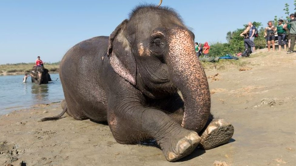 Safari elephants given a bath