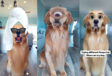 Ovaj zlatni retriver je isprobao ljudske Snapchat filtere, fotografije lome internet